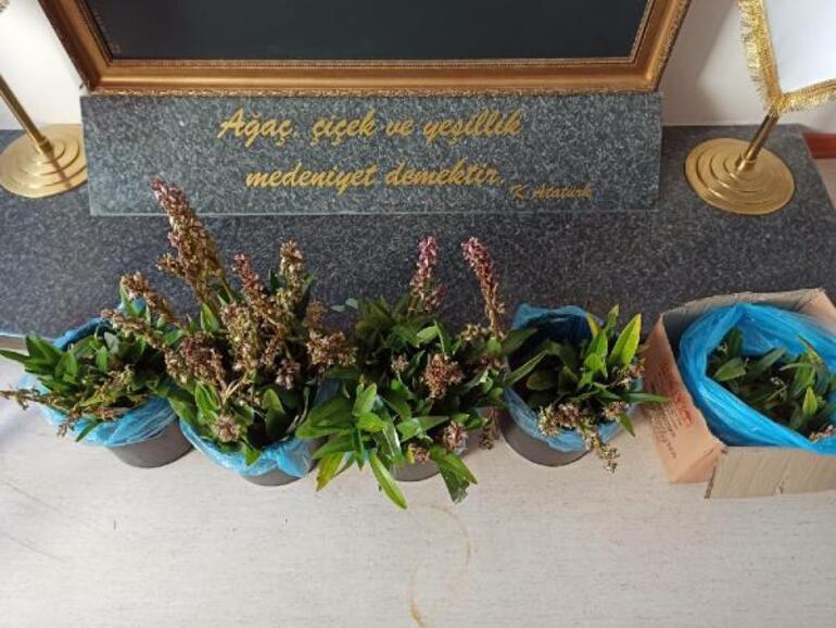 İzinsiz orkide topladılar Cezası büyük oldu