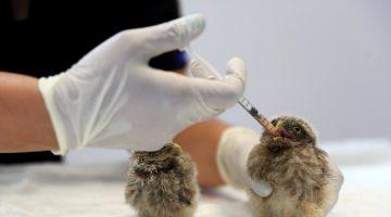 Denizli 'de Kuş yavrularına anne şefkatinde bakım