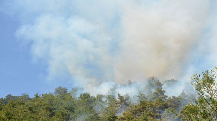 İzmir Kemalpaşa'da orman yangını çıktı! Müdahale sürüyor